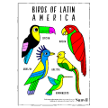 BIRDS OF LATIN AMERICA - Amanda, 11